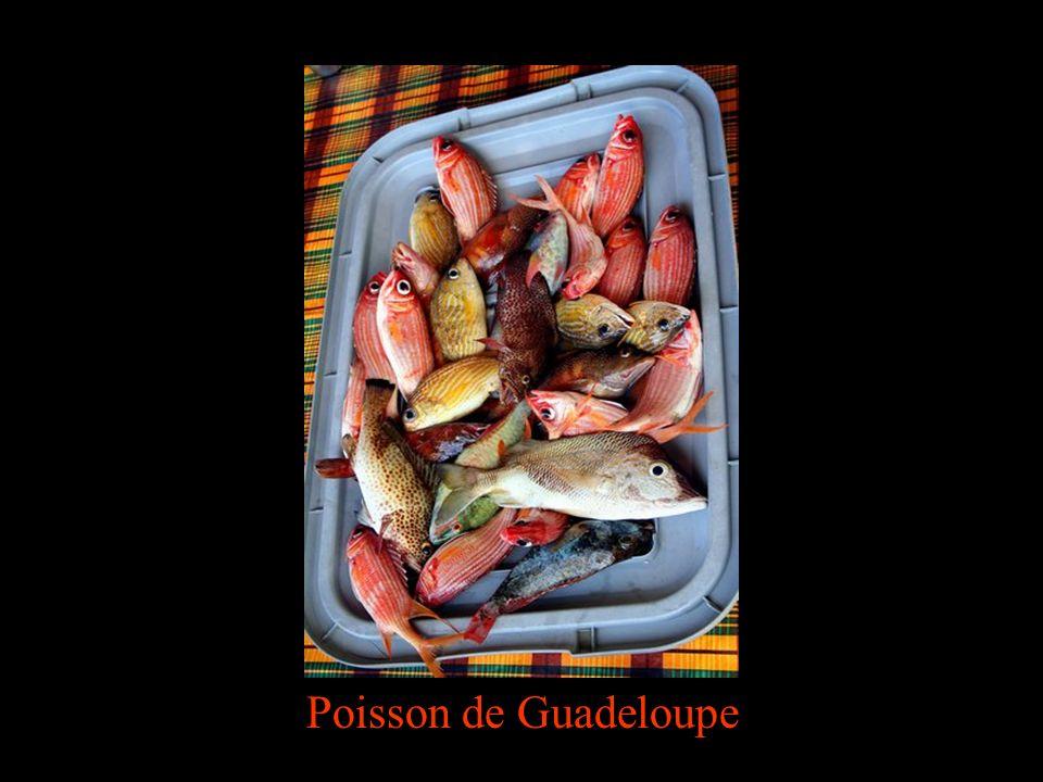 Poisson de Guadeloupe