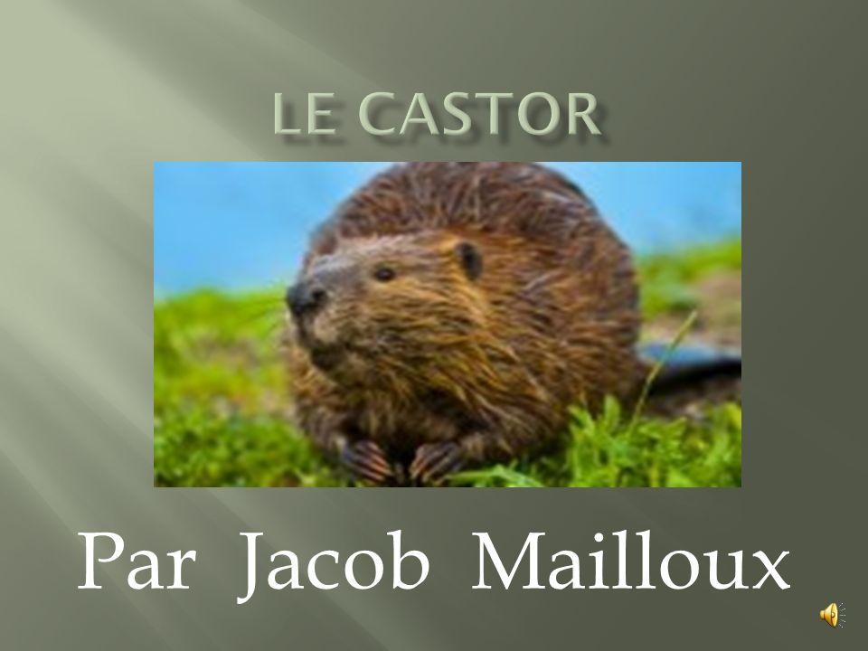 Par Jacob Mailloux