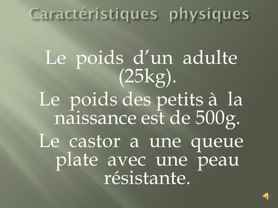 Le poids dun adulte (25kg).Le poids des petits à la naissance est de 500g.