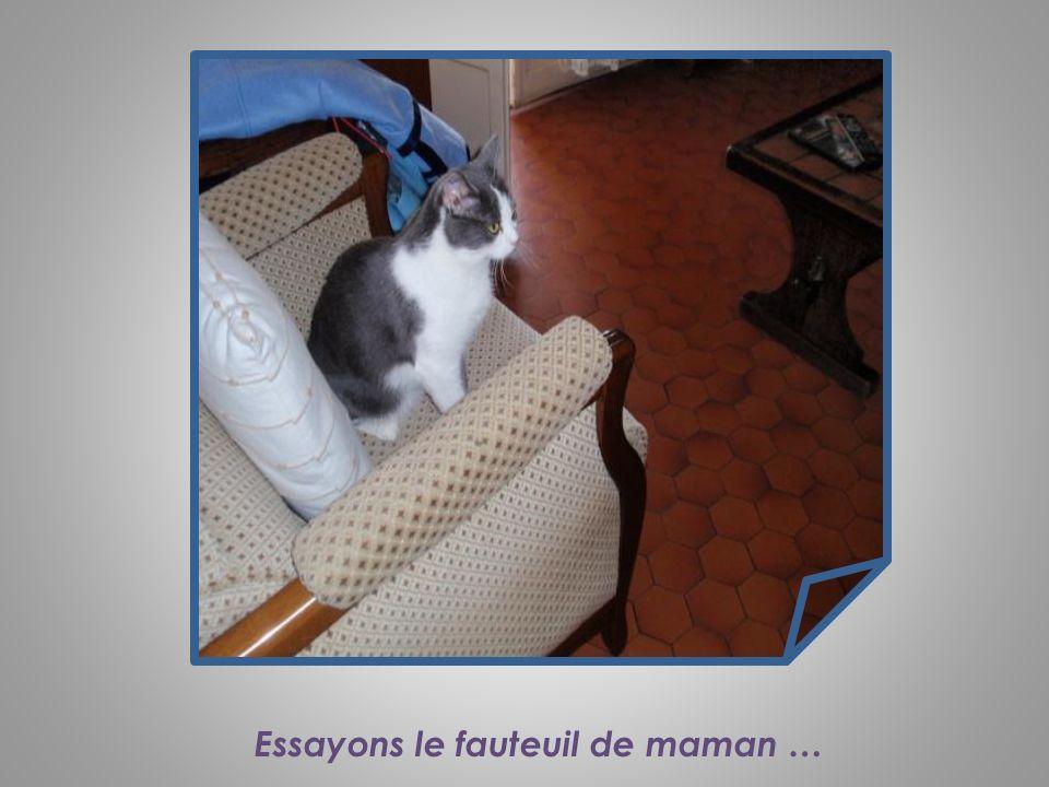 Miaou… Quel est ce bruit ? Jai peur !