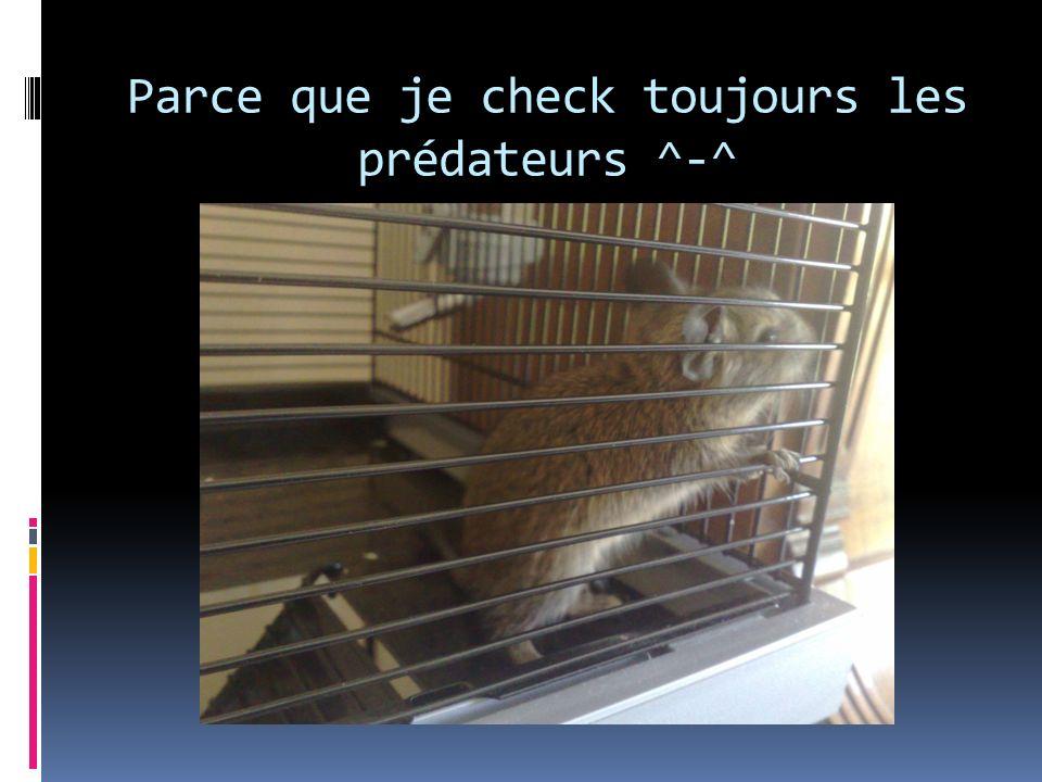 Parce que je check toujours les prédateurs ^-^