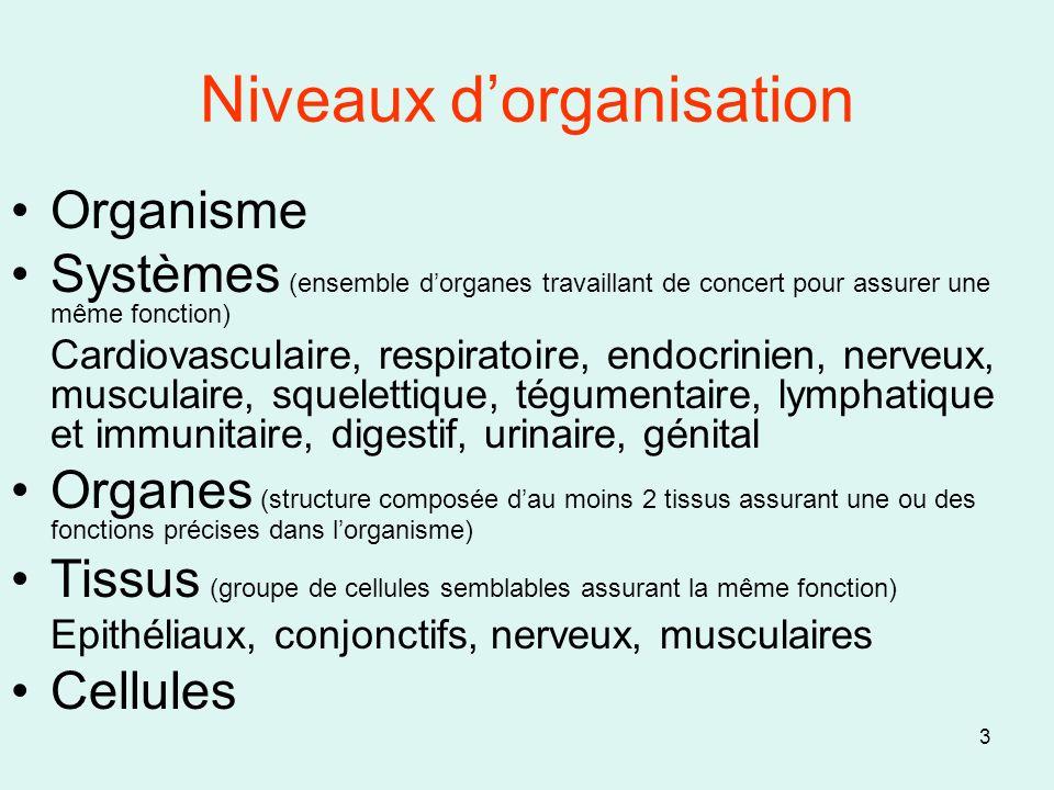 3 Niveaux dorganisation Organisme Systèmes (ensemble dorganes travaillant de concert pour assurer une même fonction) Cardiovasculaire, respiratoire, e