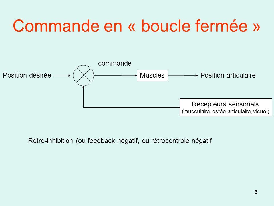 5 Commande en « boucle fermée » Muscles Récepteurs sensoriels (musculaire, ostéo-articulaire, visuel) Position articulaire commande Position désirée R