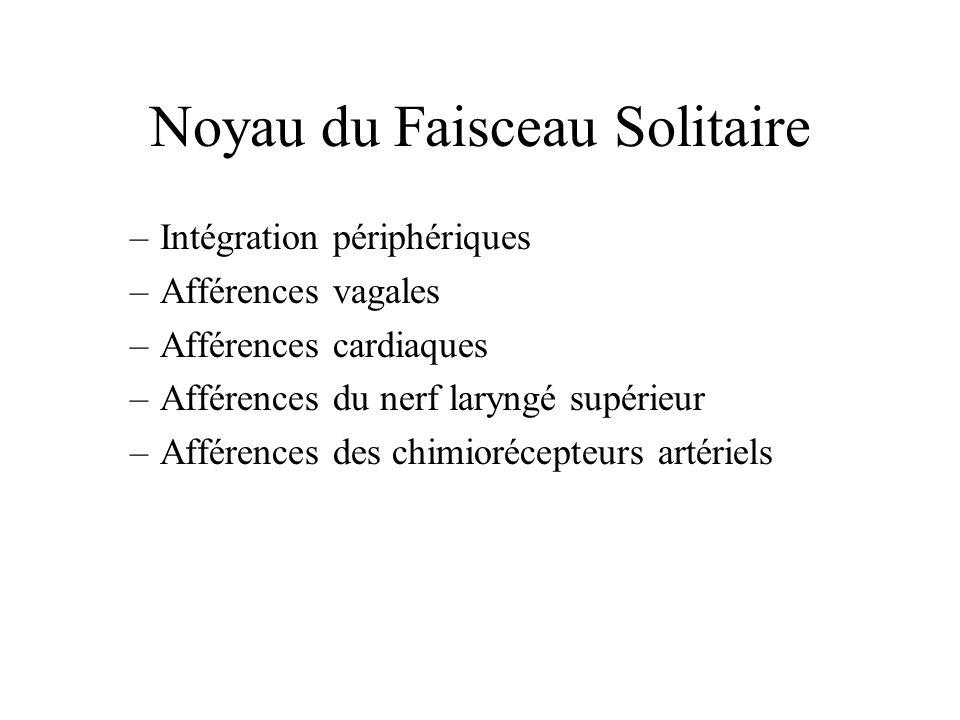 Noyau du Faisceau Solitaire –Intégration périphériques –Afférences vagales –Afférences cardiaques –Afférences du nerf laryngé supérieur –Afférences de