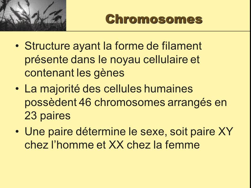 Chromosomes Structure ayant la forme de filament présente dans le noyau cellulaire et contenant les gènes La majorité des cellules humaines possèdent 46 chromosomes arrangés en 23 paires Une paire détermine le sexe, soit paire XY chez lhomme et XX chez la femme