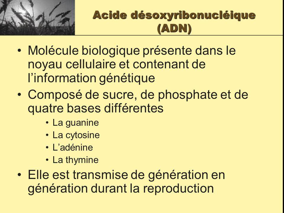 Acide désoxyribonucléique (ADN) Molécule biologique présente dans le noyau cellulaire et contenant de linformation génétique Composé de sucre, de phosphate et de quatre bases différentes La guanine La cytosine Ladénine La thymine Elle est transmise de génération en génération durant la reproduction