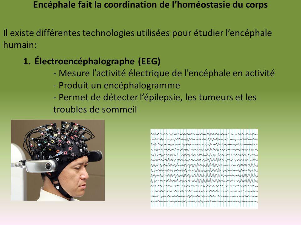 Encéphale fait la coordination de lhoméostasie du corps Il existe différentes technologies utilisées pour étudier lencéphale humain: 1.Électroencéphal