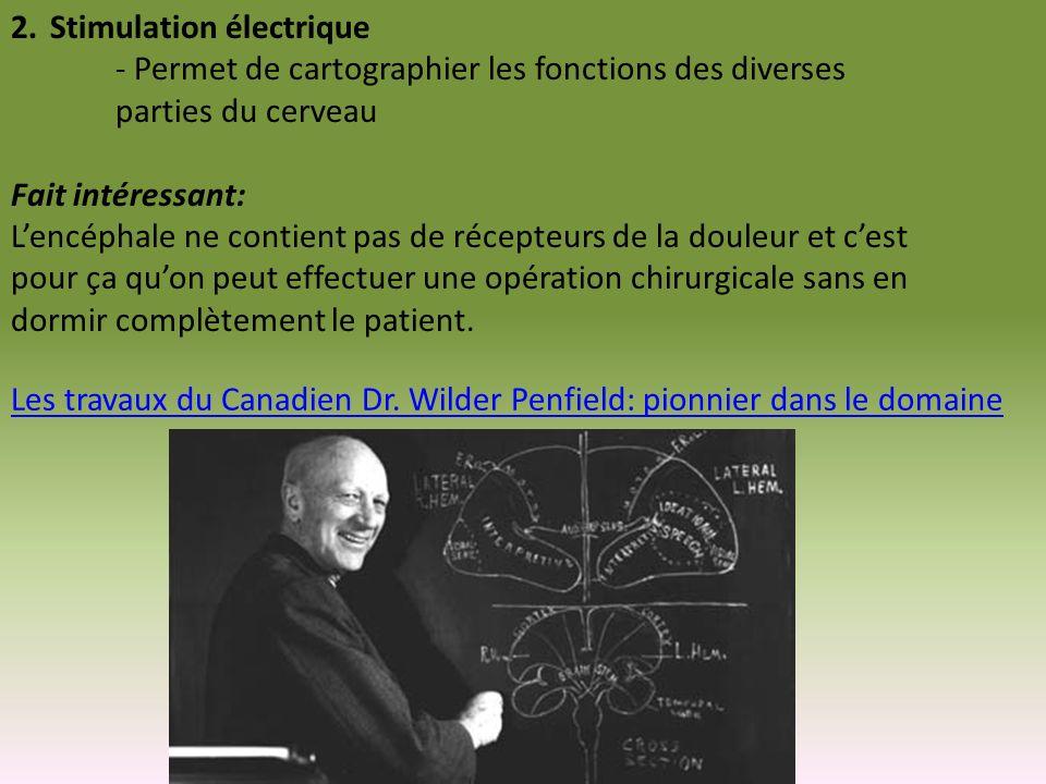 2.Stimulation électrique - Permet de cartographier les fonctions des diverses parties du cerveau Fait intéressant: Lencéphale ne contient pas de récep