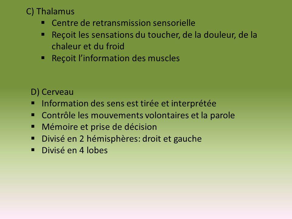 E) Hypothalamus Centre de commande du SNA Permet au corps de réagir à des menaces en envoyant des influx par SNS (sympathique) Rétablit lhoméostasie en stimulant les nerfs parasympathiques Supervise lactivité de lhypophyse Commande le système hormonal endocrinien Régule les concentrations deau dans le corps Contrôle le taux de glucose sanguin Contrôle la température corporelle Contrôle lhorloge biologique (fatigue) Centre de plaisir de la sexualité Contrôle la pression sanguine