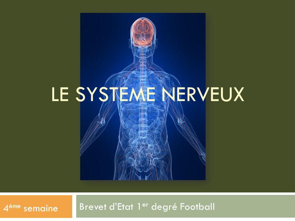 Brevet dEtat 1 er degré Football 4 ème semaine LE SYSTEME NERVEUX