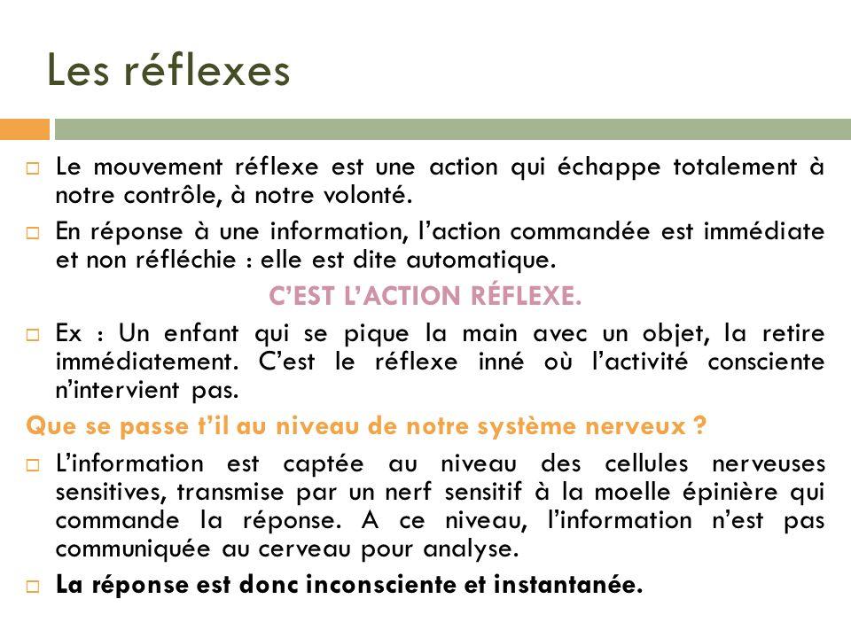 Les réflexes Le mouvement réflexe est une action qui échappe totalement à notre contrôle, à notre volonté. En réponse à une information, laction comma