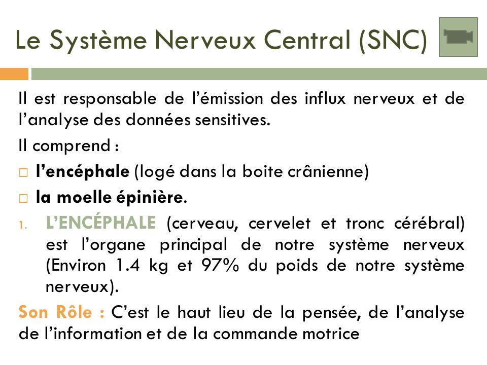 Le Système Nerveux Central (SNC) Il est responsable de lémission des influx nerveux et de lanalyse des données sensitives. Il comprend : lencéphale (l