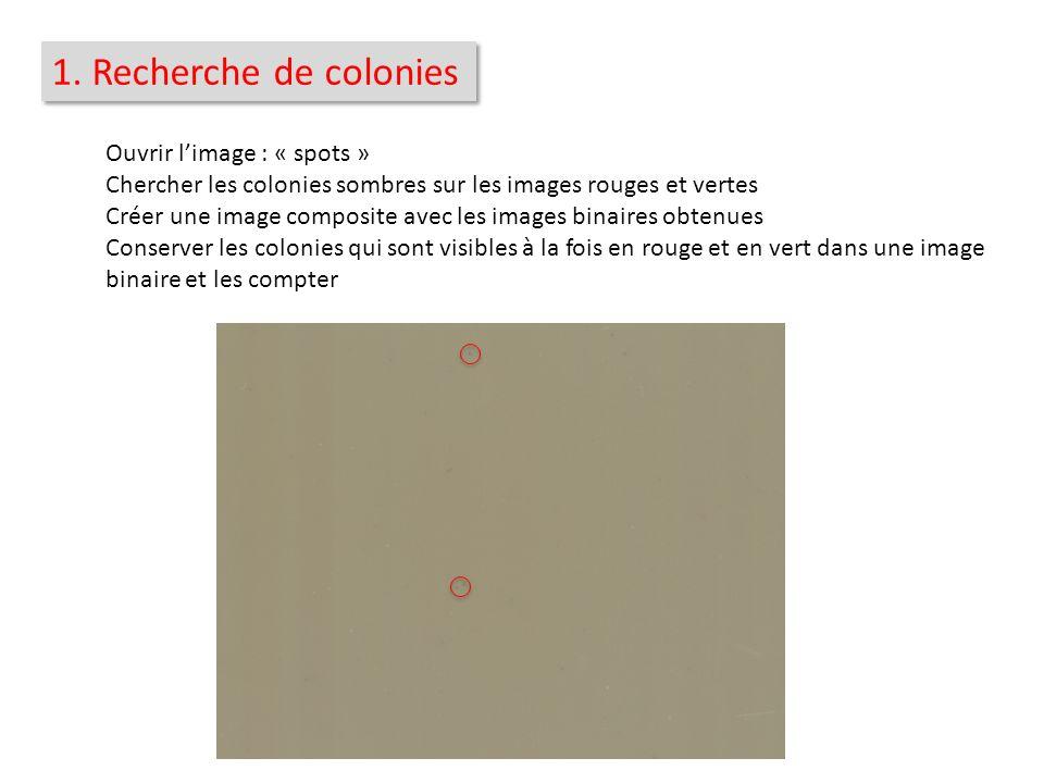 1. Recherche de colonies Ouvrir limage : « spots » Chercher les colonies sombres sur les images rouges et vertes Créer une image composite avec les im