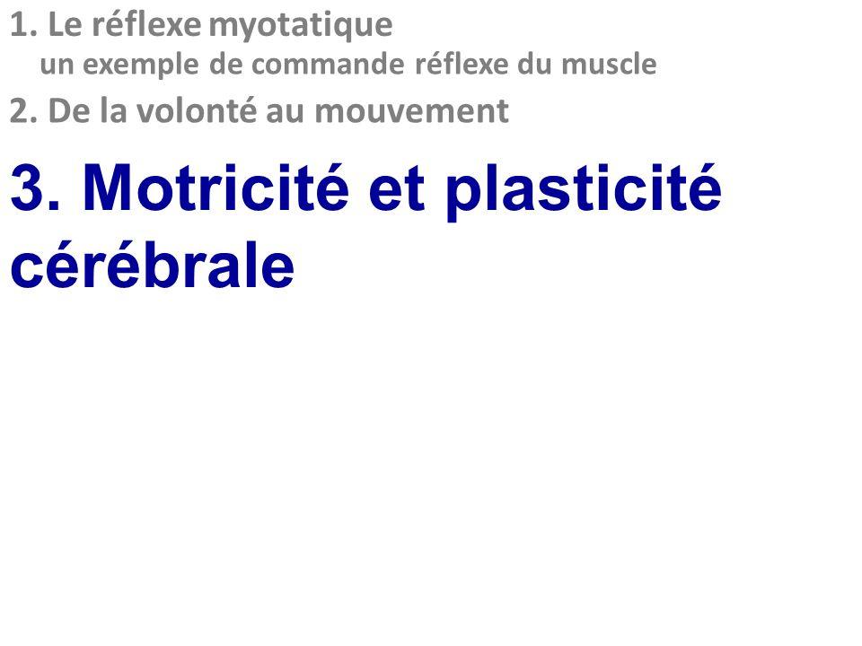 2. De la volonté au mouvement 1. Le réflexe myotatique un exemple de commande réflexe du muscle 3. Motricité et plasticité cérébrale