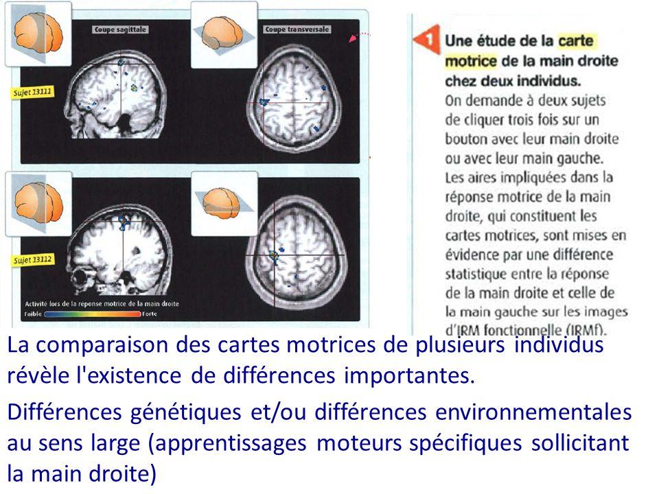 La comparaison des cartes motrices de plusieurs individus révèle l'existence de différences importantes. Différences génétiques et/ou différences envi