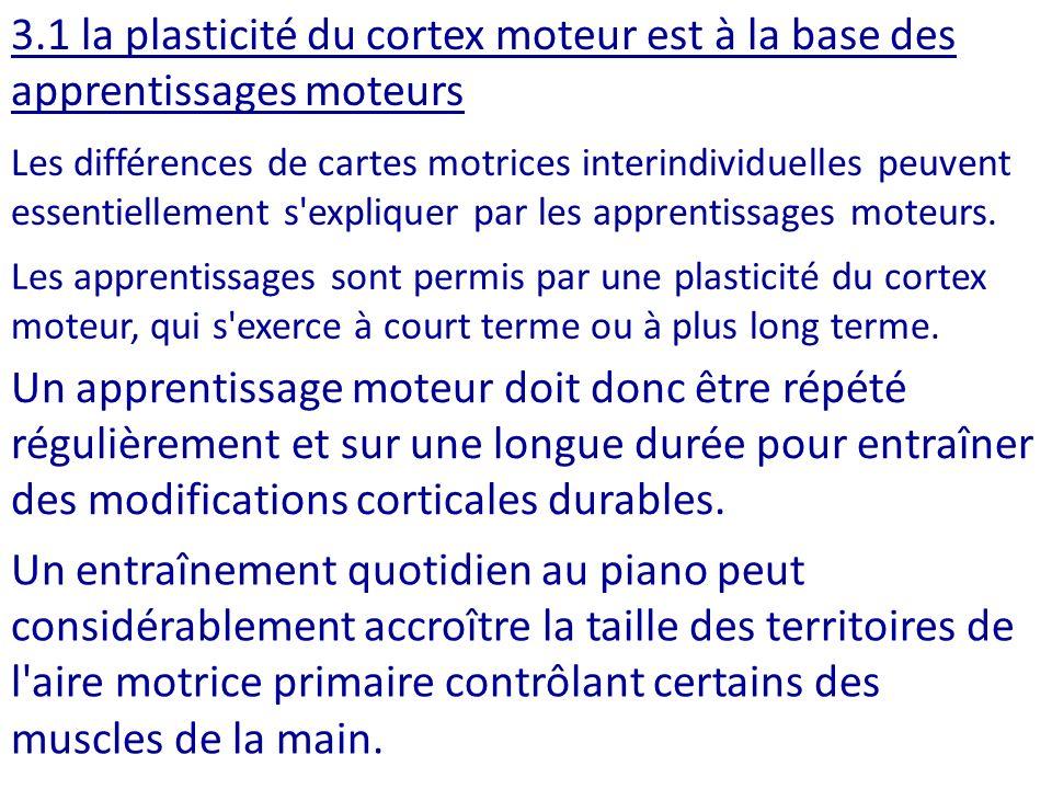 3.1 la plasticité du cortex moteur est à la base des apprentissages moteurs Les différences de cartes motrices interindividuelles peuvent essentiellem