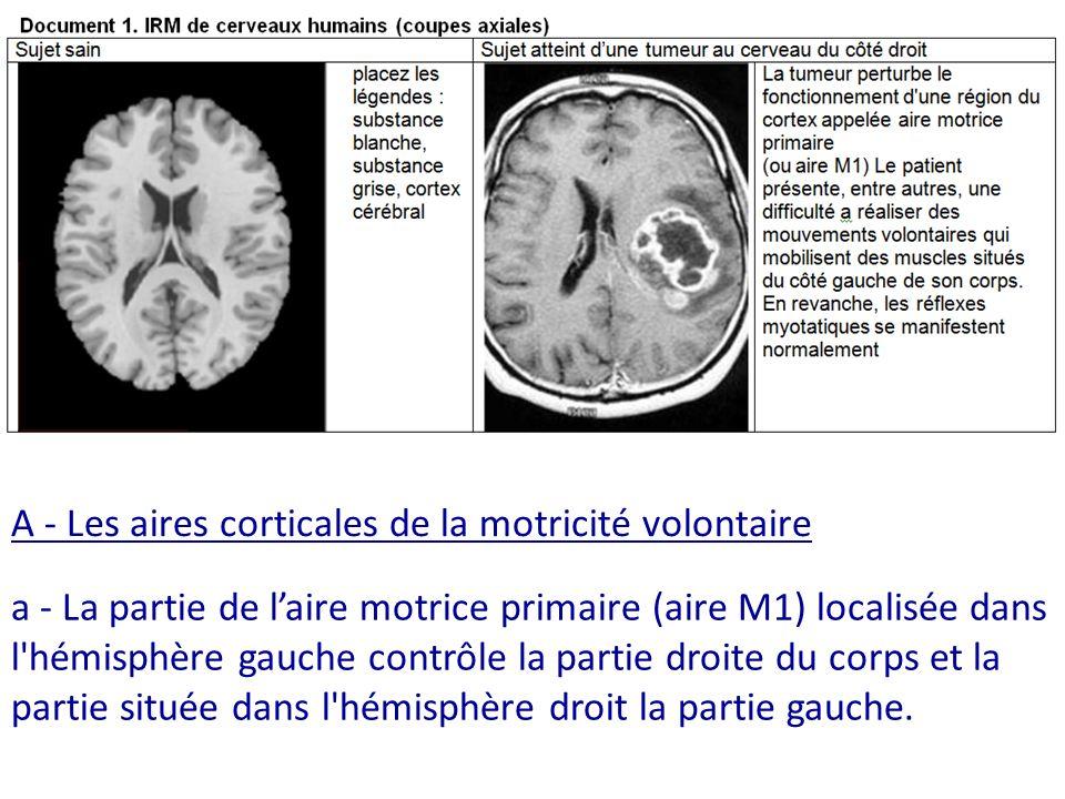 Substance grise externe = cortex cérébral Substance blanche a - La partie de laire motrice primaire (aire M1) localisée dans l hémisphère gauche contrôle la partie droite du corps et la partie située dans l hémisphère droit la partie gauche.