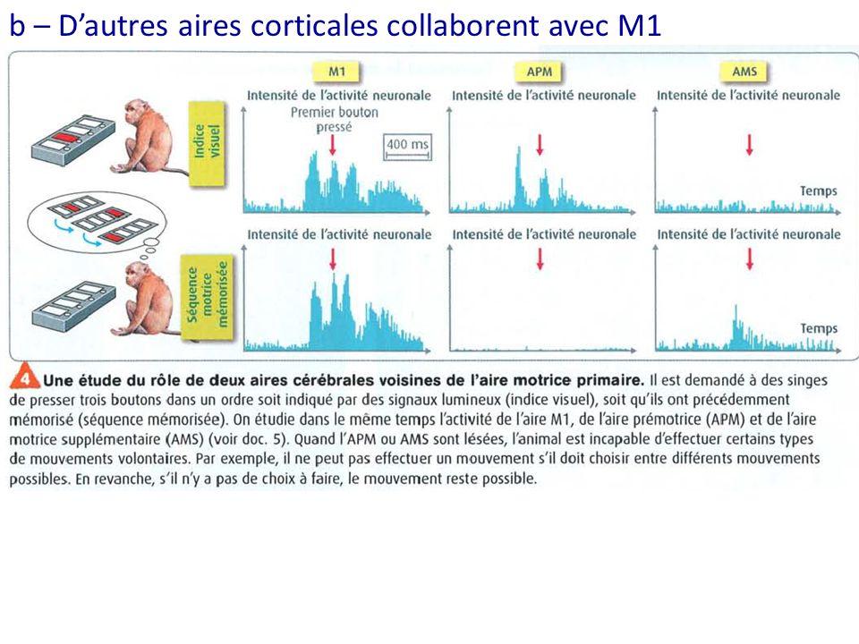 b – Dautres aires corticales collaborent avec M1