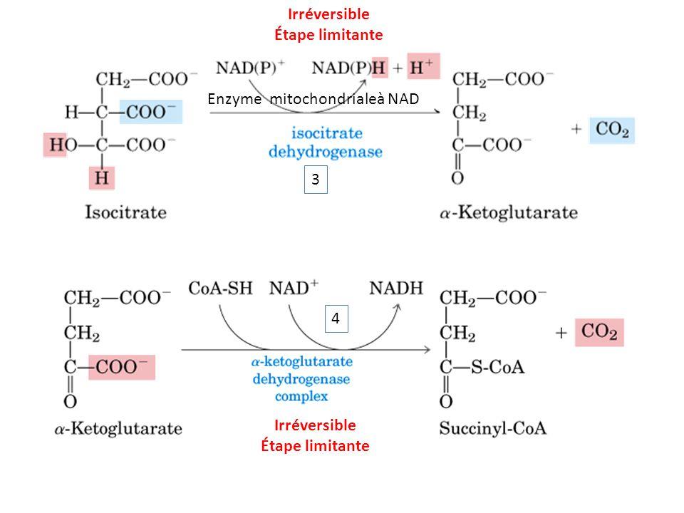 Irréversible Étape limitante 3 Enzyme mitochondrialeà NAD 4 Irréversible Étape limitante
