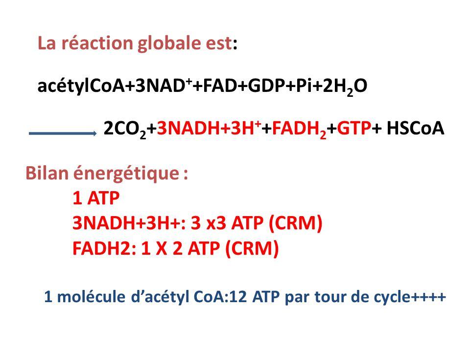 La réaction globale est: acétylCoA+3NAD + +FAD+GDP+Pi+2H 2 O 2CO 2 +3NADH+3H + +FADH 2 +GTP+ HSCoA Bilan énergétique : 1 ATP 3NADH+3H+: 3 x3 ATP (CRM) FADH2: 1 X 2 ATP (CRM) 1 molécule dacétyl CoA:12 ATP par tour de cycle++++