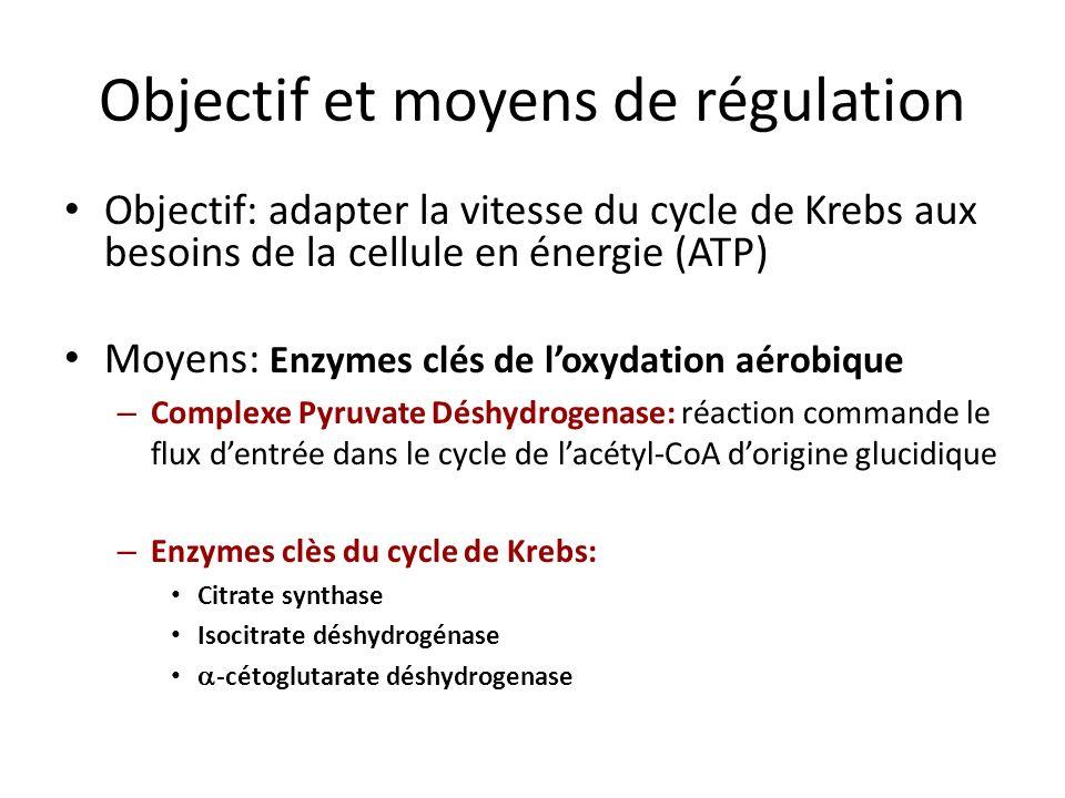 Objectif et moyens de régulation Objectif: adapter la vitesse du cycle de Krebs aux besoins de la cellule en énergie (ATP) Moyens: Enzymes clés de loxydation aérobique – Complexe Pyruvate Déshydrogenase: réaction commande le flux dentrée dans le cycle de lacétyl-CoA dorigine glucidique – Enzymes clès du cycle de Krebs: Citrate synthase Isocitrate déshydrogénase -cétoglutarate déshydrogenase