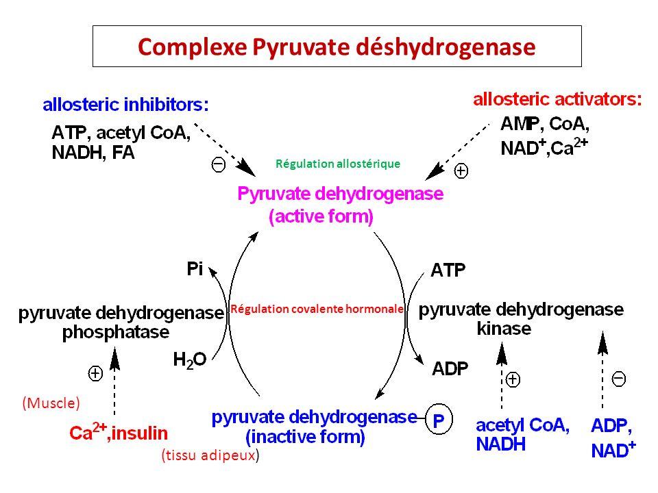 Complexe Pyruvate déshydrogenase (Muscle) (tissu adipeux) Régulation covalente hormonale Régulation allostérique