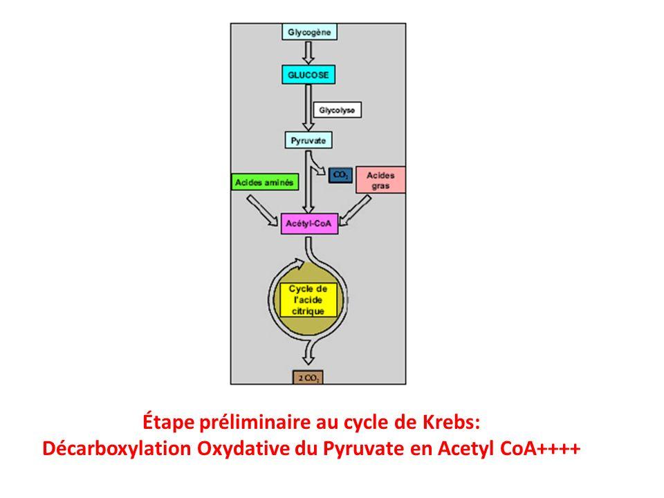 Les 8 réactions du cycle de Krebs