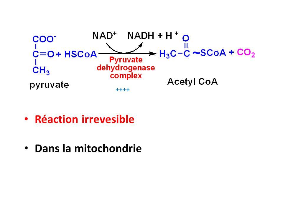 Le complexe Pyruvate déshydrogénase E1 pyruvate déshydrogenase Enzymes (3) E2 dihydrolipoyl transacétylase E3 dihydrolipoyl déshydrogenase Thiamine PyroPhosphate, TPP (VitB 1 ) HSCoA (Vit B5) Cofacteurs (5) Acide lipoΪque NAD + (Vit B3) FAD (VitB2) HSCoA NAD +