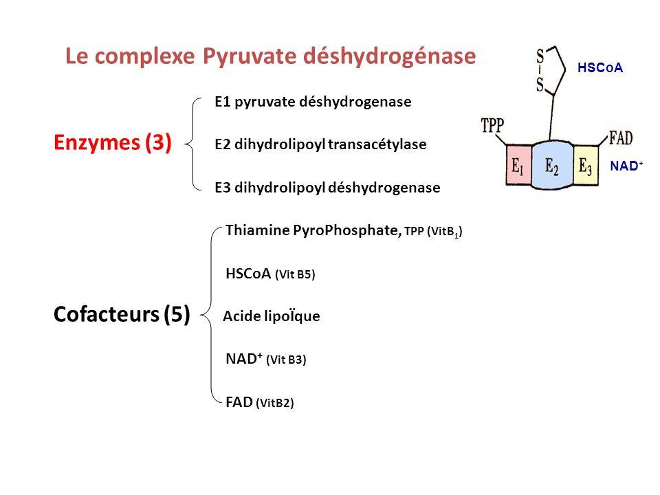 Bilans du cycle de lacide citrique