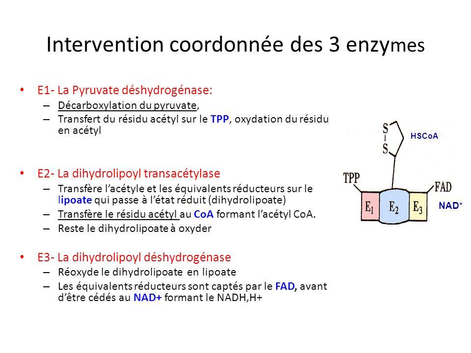 Bilan énergétique de dégradation de lacide stéarique C18 (acide gras)