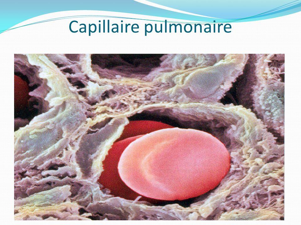 Capillaire pulmonaire