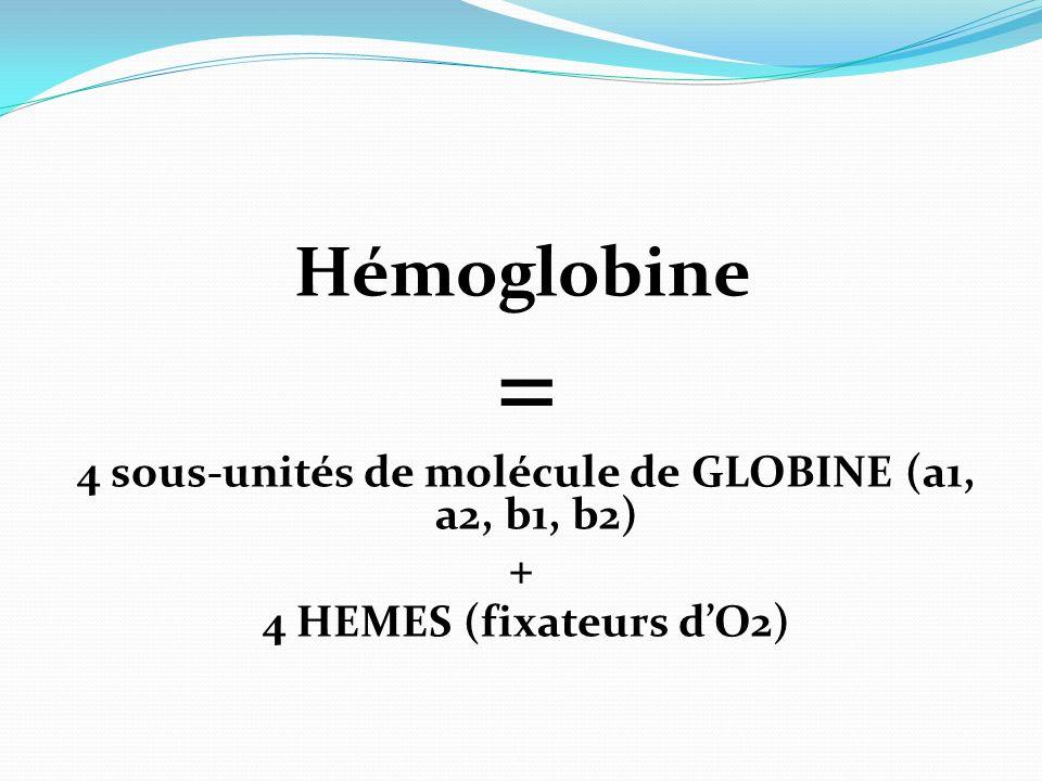 Hémoglobine = 4 sous-unités de molécule de GLOBINE (a1, a2, b1, b2) + 4 HEMES (fixateurs dO2)