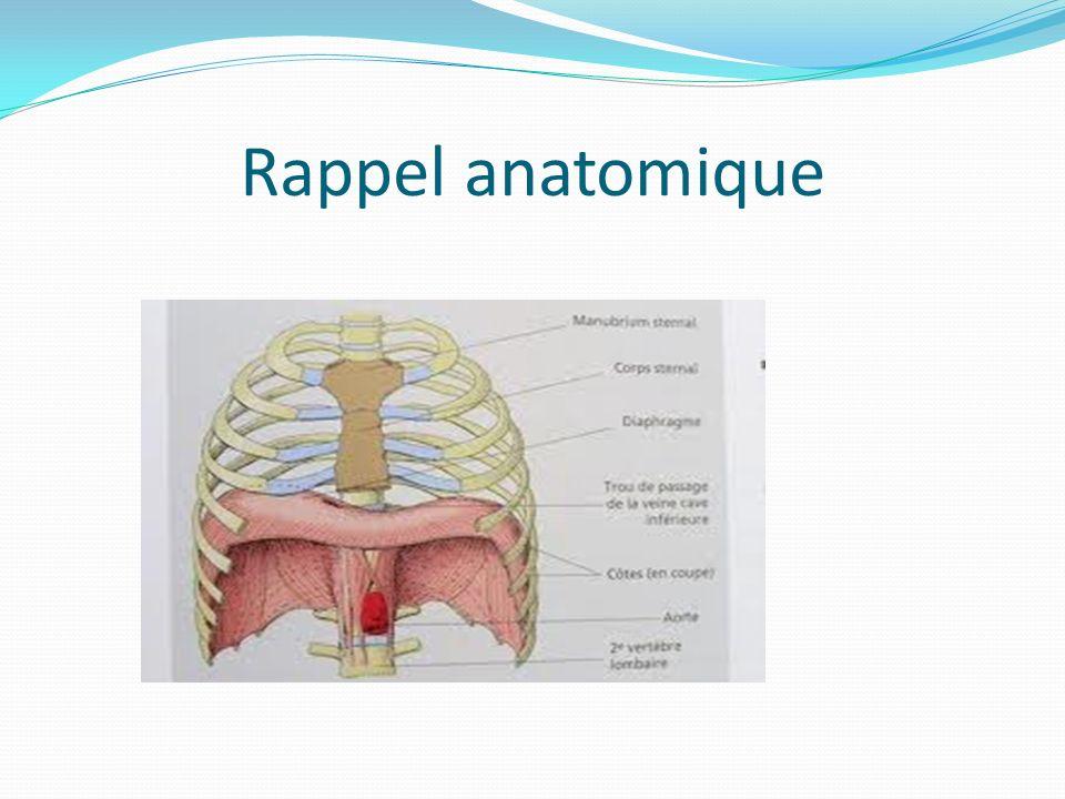 Commande des muscles respiratoires Innervation-commande des muscles respiratoires : DIAPHRAGME: nerfs phréniques, issus des 3ème à 5ème (ou 6ème) métamères de moelle cervicale – descente intra thoracique (fragilité)
