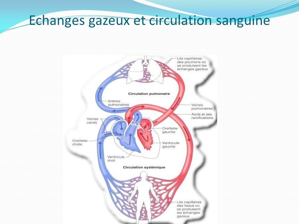 Echanges gazeux et circulation sanguine