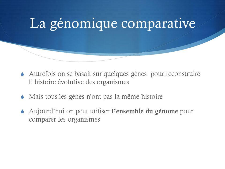 La génomique comparative Autrefois on se basait sur quelques gènes pour reconstruire l histoire évolutive des organismes Mais tous les gènes nont pas