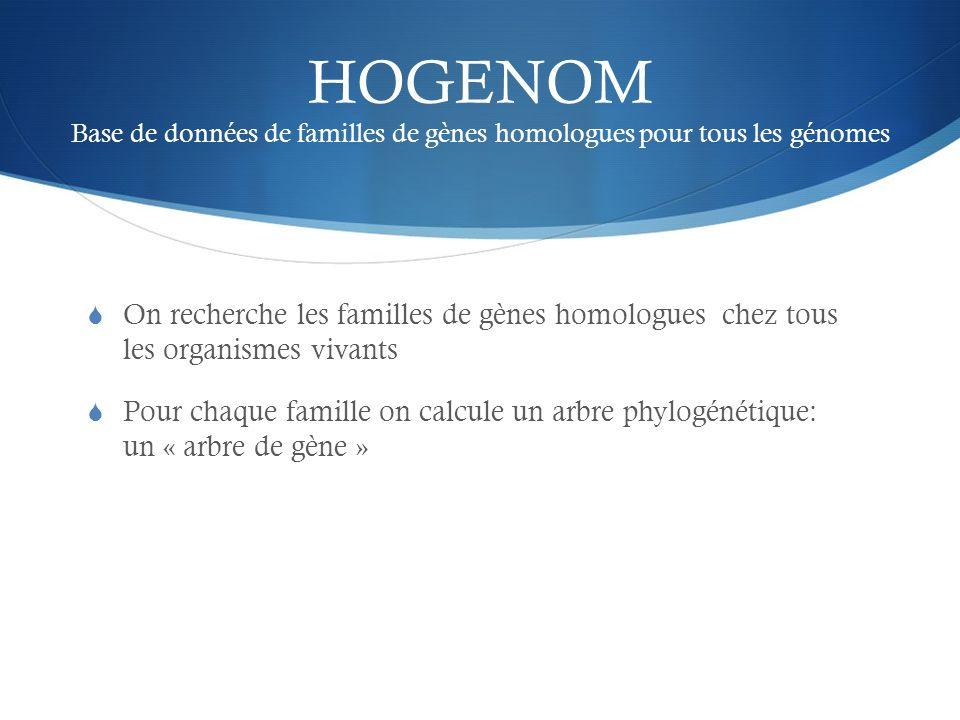 HOGENOM Base de données de familles de gènes homologues pour tous les génomes On recherche les familles de gènes homologues chez tous les organismes v