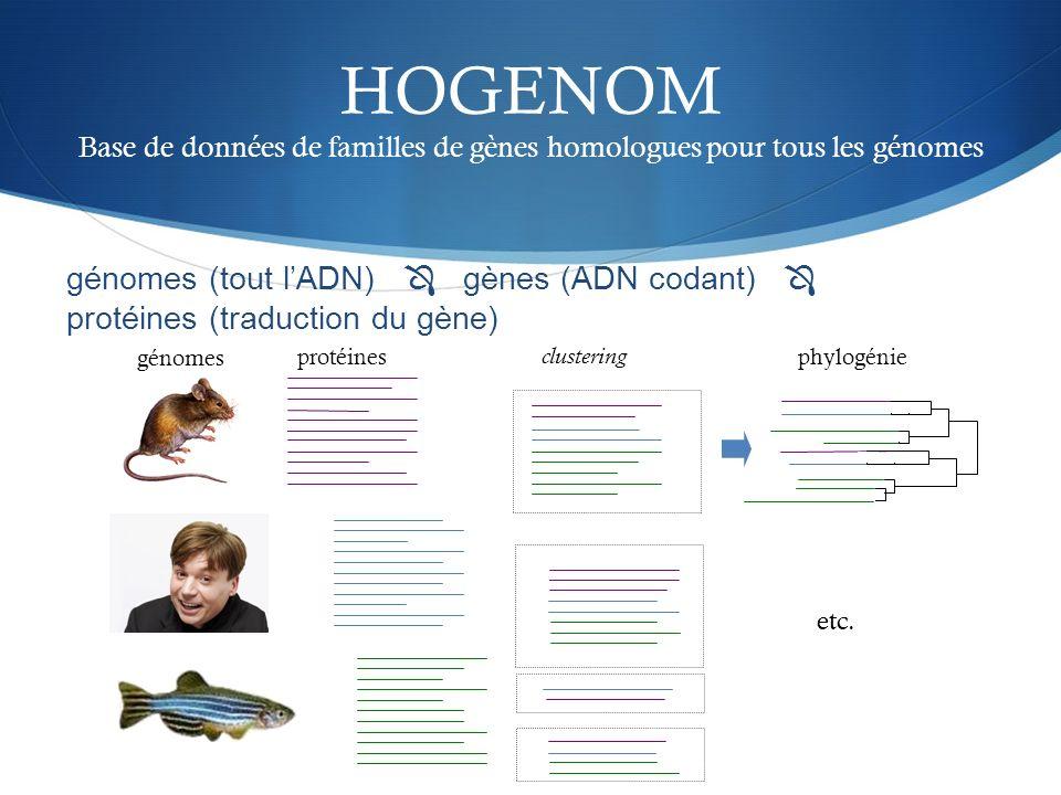 HOGENOM Base de données de familles de gènes homologues pour tous les génomes clustering phylogénie etc. génomes protéines génomes (tout lADN) gènes (