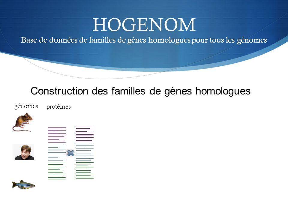 HOGENOM Base de données de familles de gènes homologues pour tous les génomes génomes protéines Construction des familles de gènes homologues