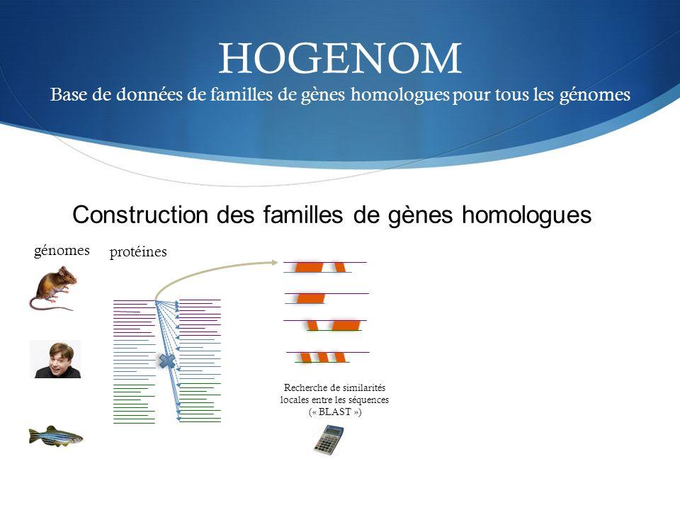 HOGENOM Base de données de familles de gènes homologues pour tous les génomes génomes Recherche de similarités locales entre les séquences (« BLAST »)