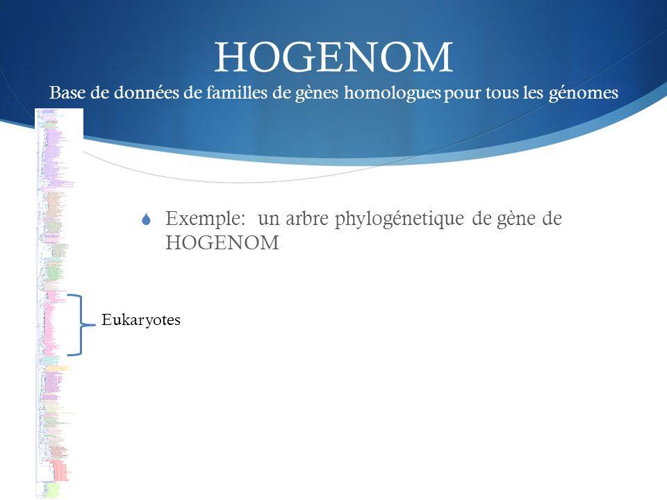 HOGENOM Base de données de familles de gènes homologues pour tous les génomes Exemple: un arbre phylogénetique de gène de HOGENOM Eukaryotes