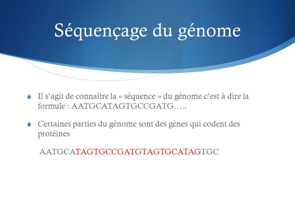 Séquençage du génome Il sagit de connaître la « séquence » du génome cest à dire la formule : AATGCATAGTGCCGATG….. Certaines parties du génome sont de