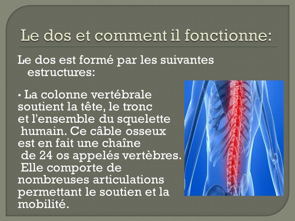 Le dos est formé par les suivantes estructures: La colonne vertébrale soutient la tête, le tronc et l'ensemble du squelette humain. Ce câble osseux es