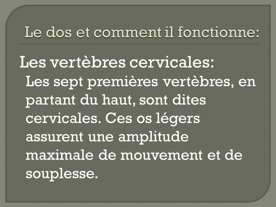 Les vertèbres cervicales: Les sept premières vertèbres, en partant du haut, sont dites cervicales. Ces os légers assurent une amplitude maximale de mo