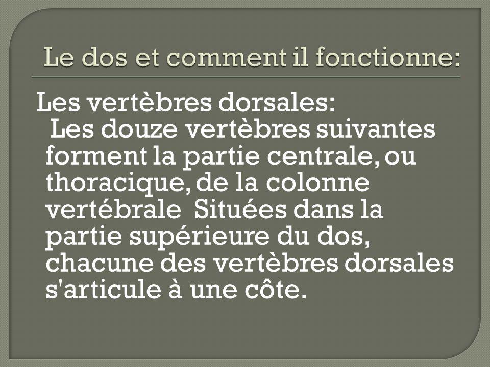 - La scoliose: L hyper lordose lombaire peut être constitutionnelle ou compenser un dos rond.