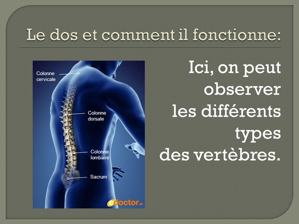 La moelle épinière: En plus du soutien, le rôle le plus important de la colonne vertébrale est la protection de la moelle épinière.