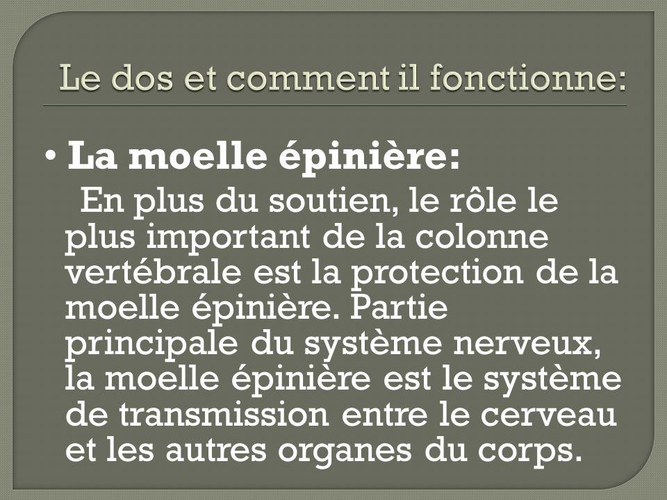 La moelle épinière: En plus du soutien, le rôle le plus important de la colonne vertébrale est la protection de la moelle épinière. Partie principale