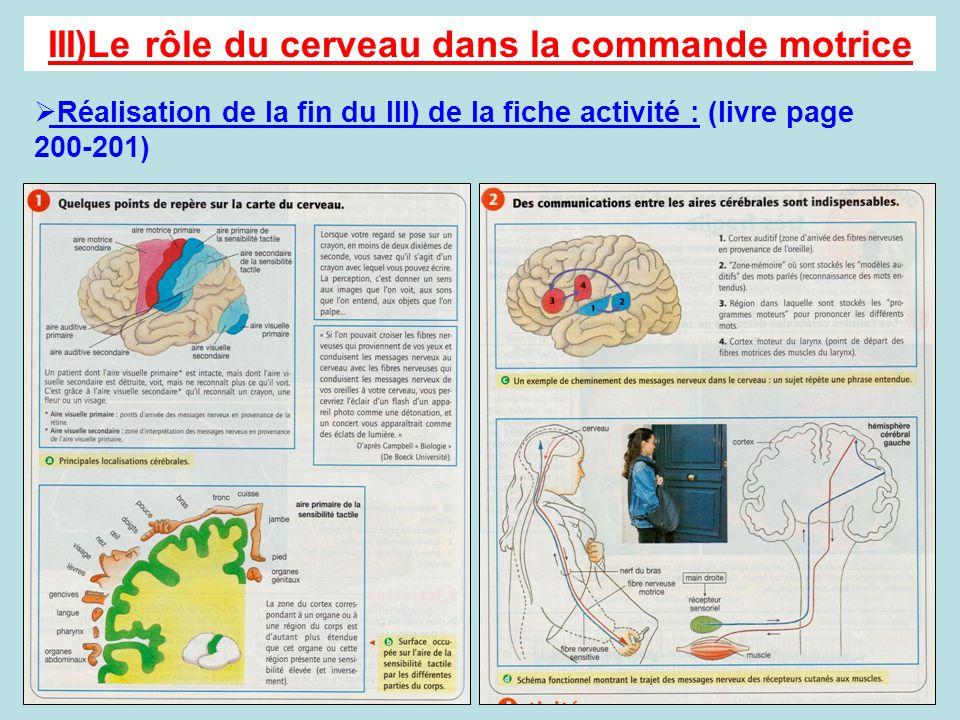 III)Le rôle du cerveau dans la commande motrice Réalisation de la fin du III) de la fiche activité : (livre page 200-201)