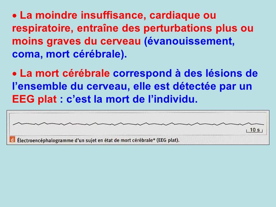 La moindre insuffisance, cardiaque ou respiratoire, entraîne des perturbations plus ou moins graves du cerveau (évanouissement, coma, mort cérébrale).