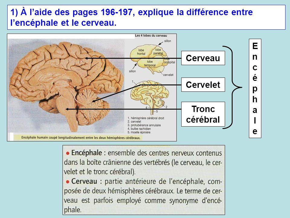 1) À laide des pages 196-197, explique la différence entre lencéphale et le cerveau. Cerveau Cervelet Tronc cérébral EncéphaleEncéphale