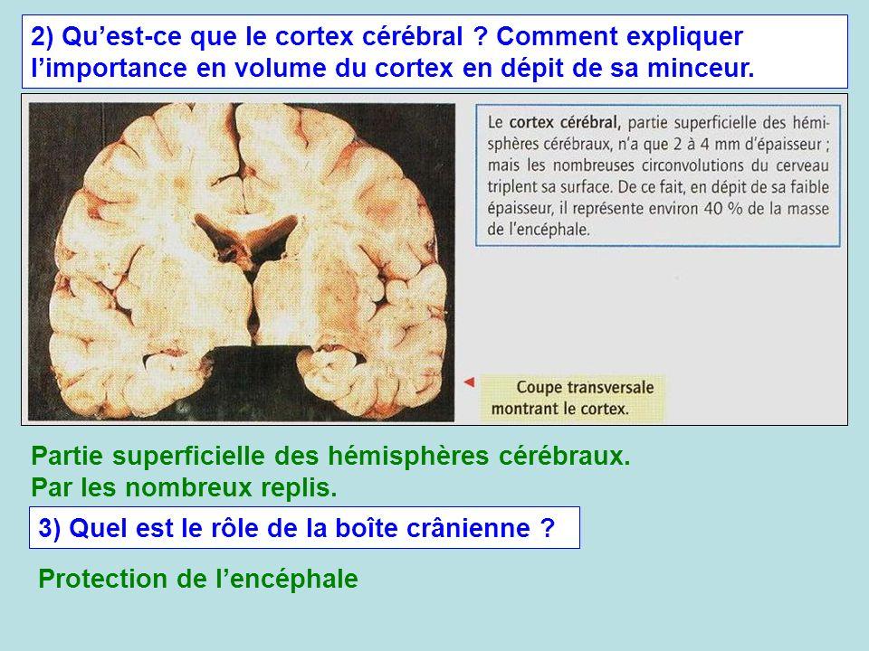 2) Quest-ce que le cortex cérébral ? Comment expliquer limportance en volume du cortex en dépit de sa minceur. Partie superficielle des hémisphères cé